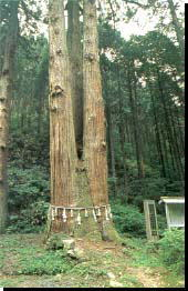 御岩山・三本杉